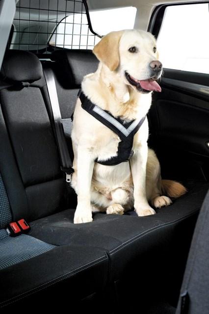 MiM All Safe Bilsele i bilen