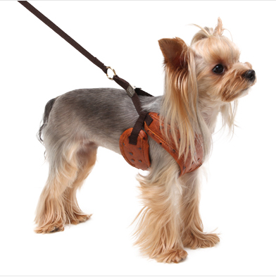 PA Ostrich FASTENY HARNESS Brown