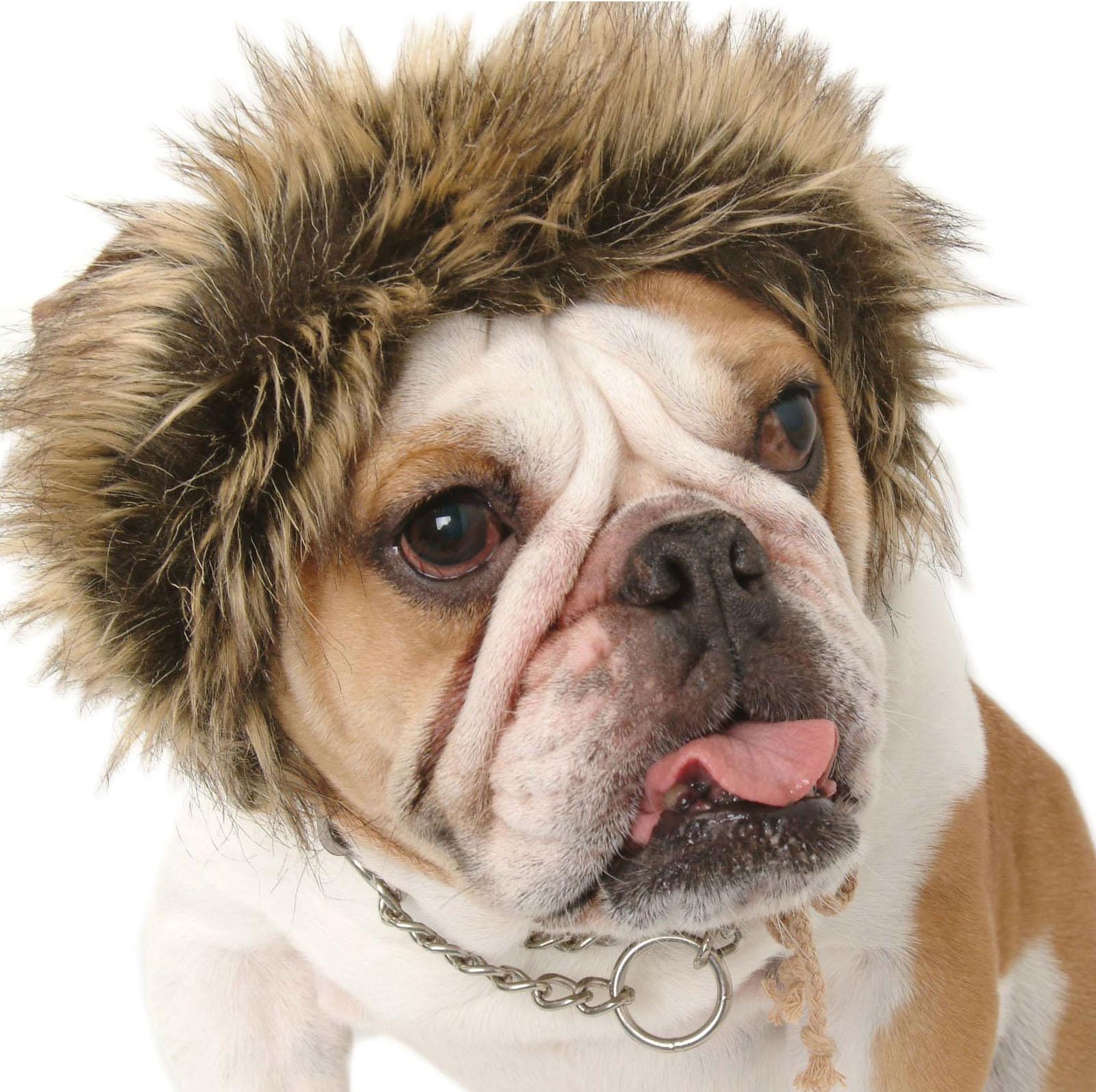 Leo Lion Luva