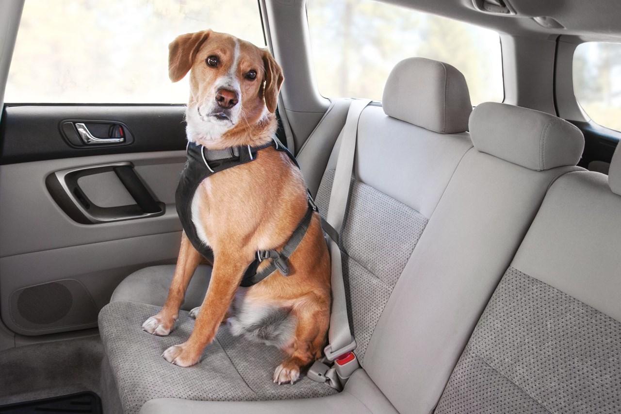 Ruffwear Load Up Bilbälte i bilen