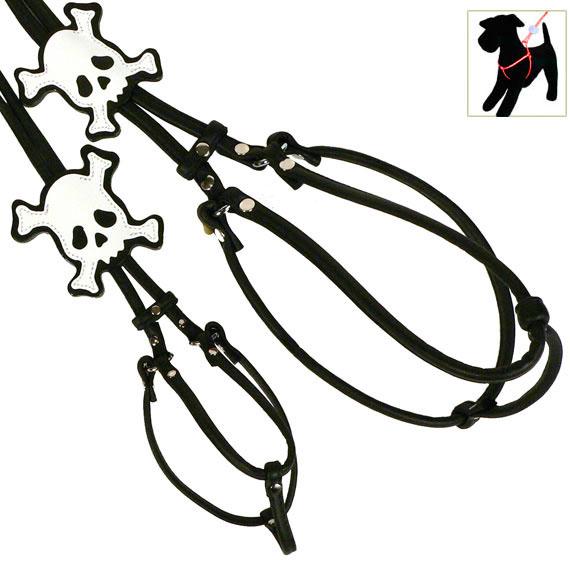 Black Skull step-in Harness & Lead