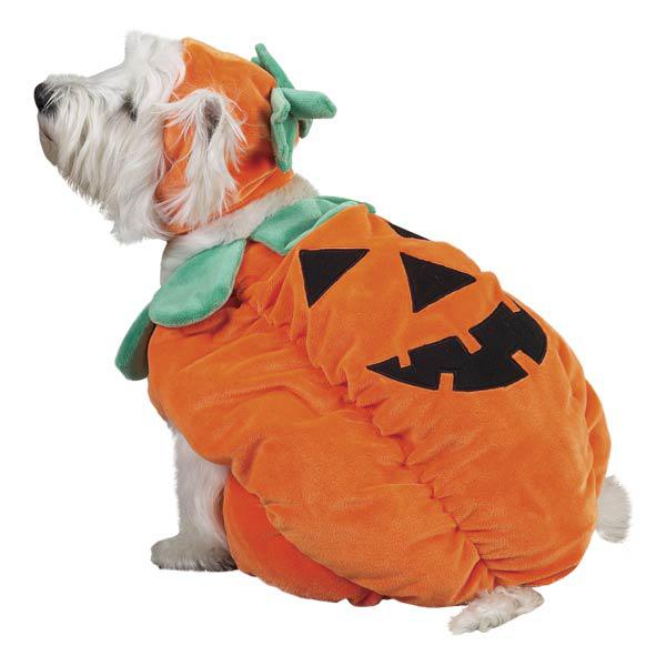 Pumpkin Pooch Kostym - Hundkläder