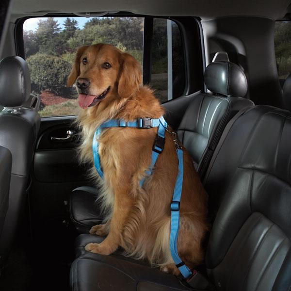 Cruising Blue - Bilsele för hundar