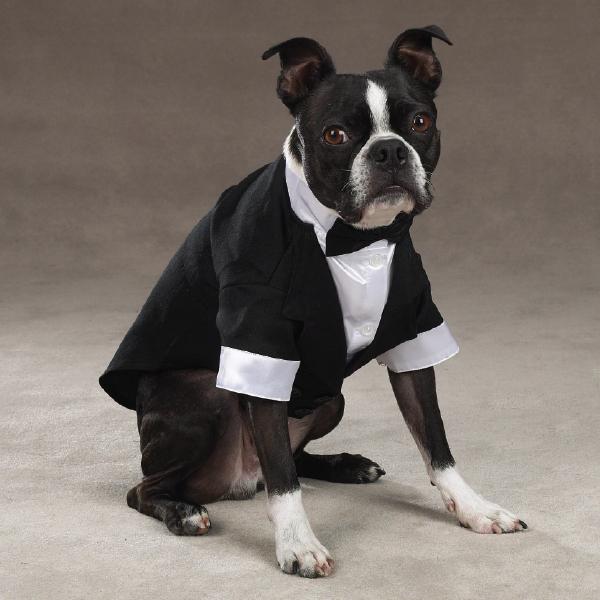 Stilig Klassisk Smoking - Hundkläder